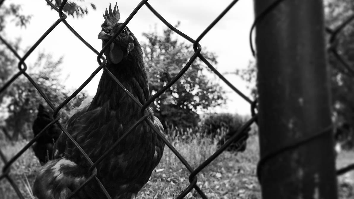 The Chicken by Sorrowda