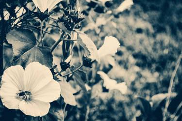 Flower Wallpaper by Sorrowda