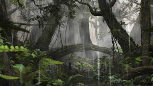 Rain Forest Stock