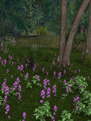 Forest Flowers Stock