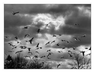 In Flight by syrenemyst