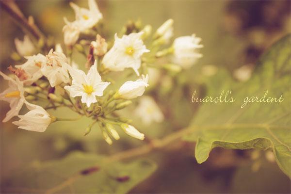 sweet gardent