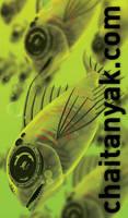 radioactive fish id by chaitanyak