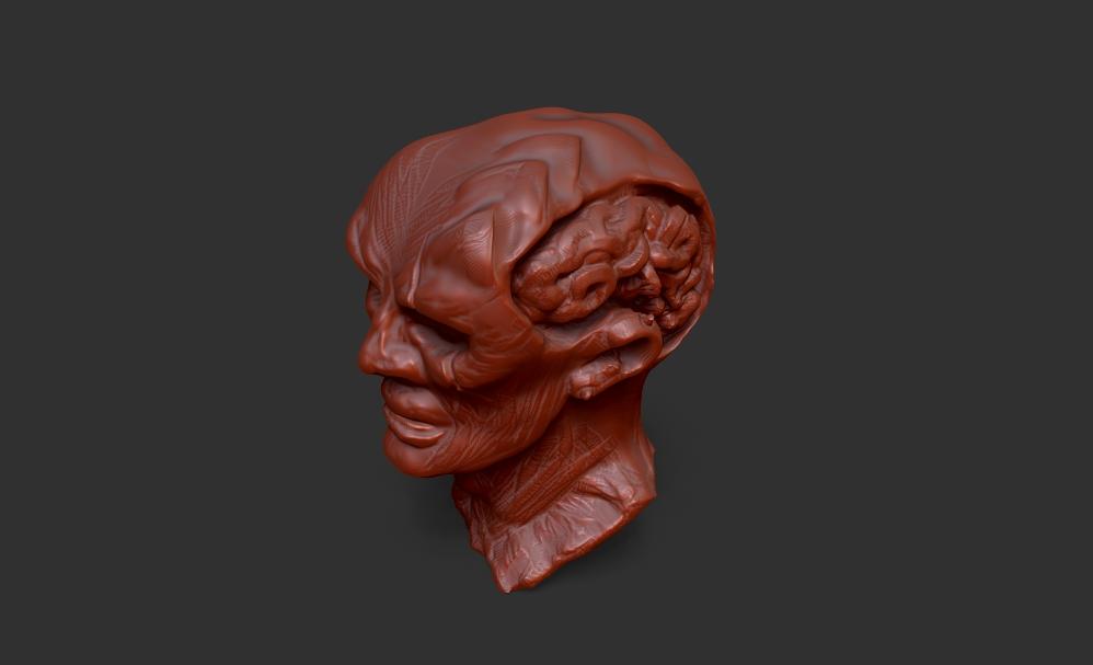 Head Sketch 002 Brain Exposed by chaitanyak