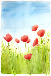 poppies by Ithilloth