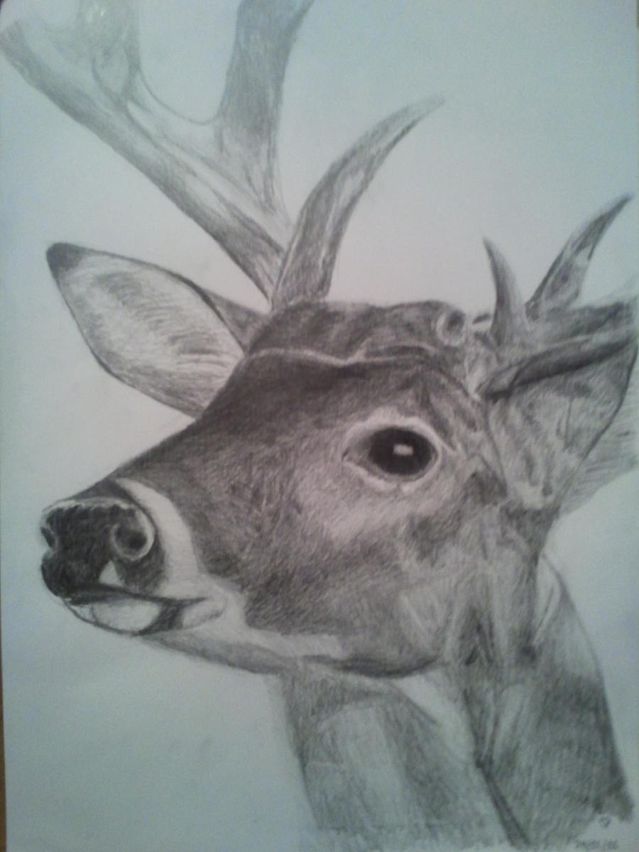 deer head drawing tumblr - photo #40