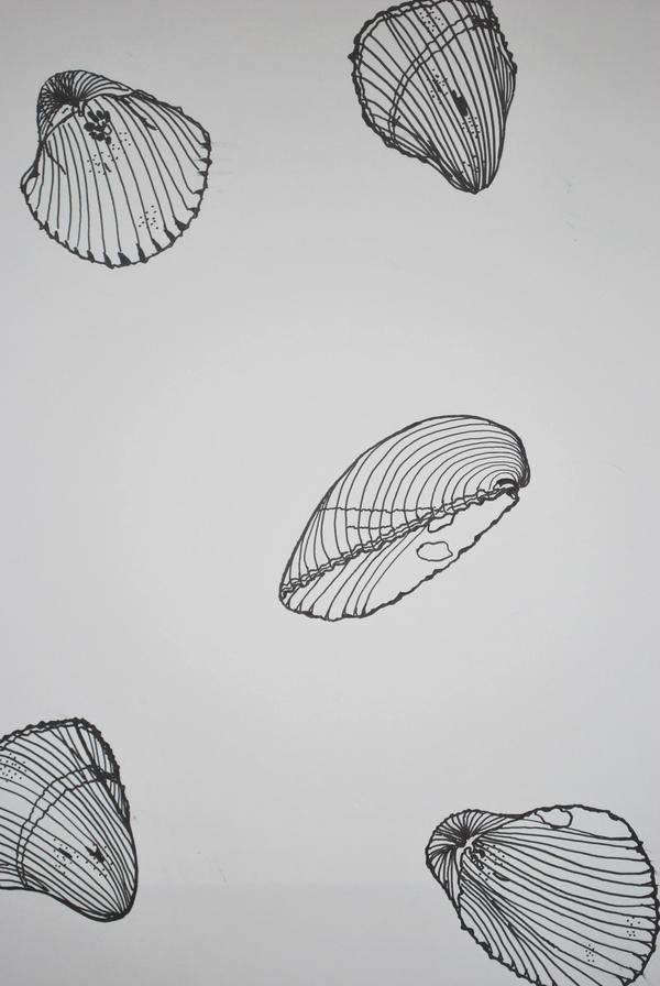 Contour Line Drawing Easy : Contour drawing shell by brittanysilva on deviantart