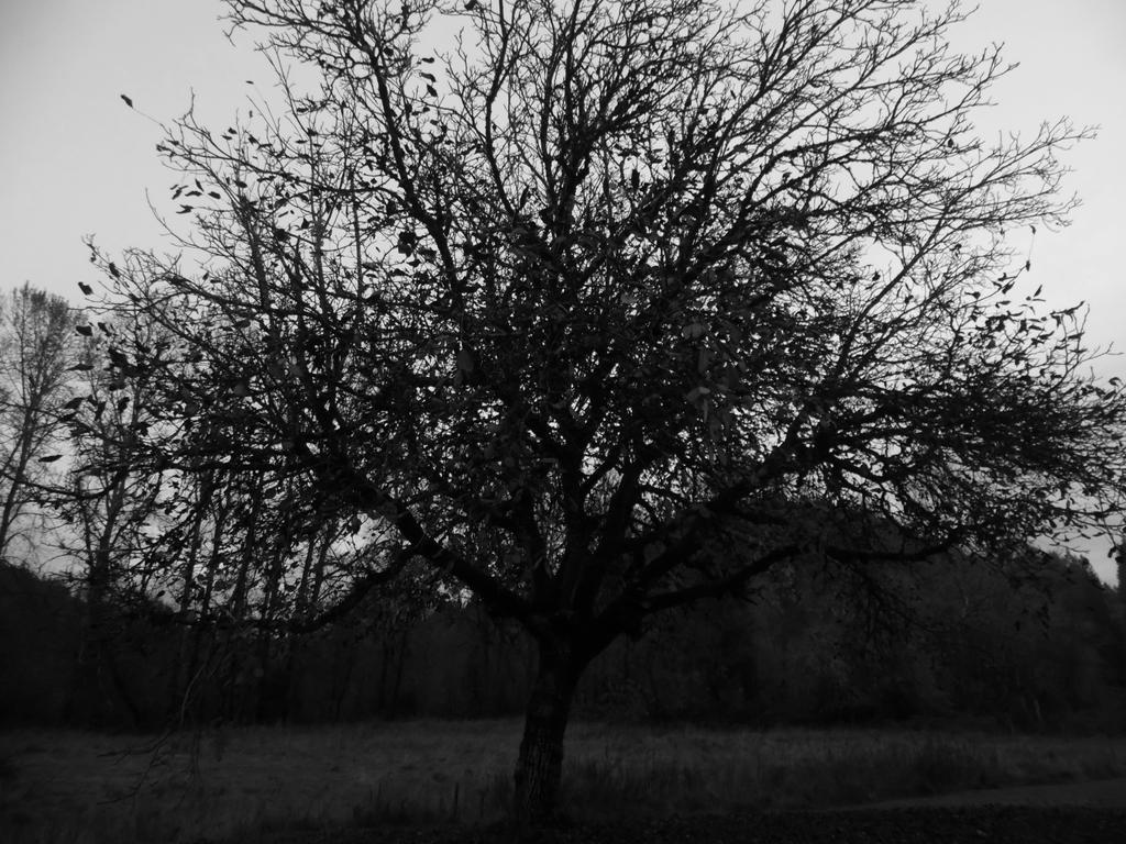 Spoopy Walnut  tree by BentonThePhotoKing