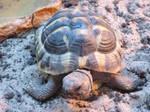 Stock Tortoise 8