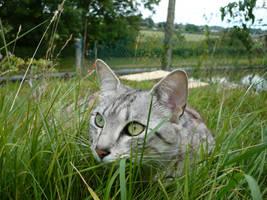Cat 131 by Sheepy-Pie-Stock