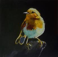 Robin by douglascampos