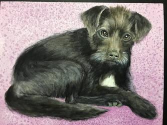 Pet portrait #7