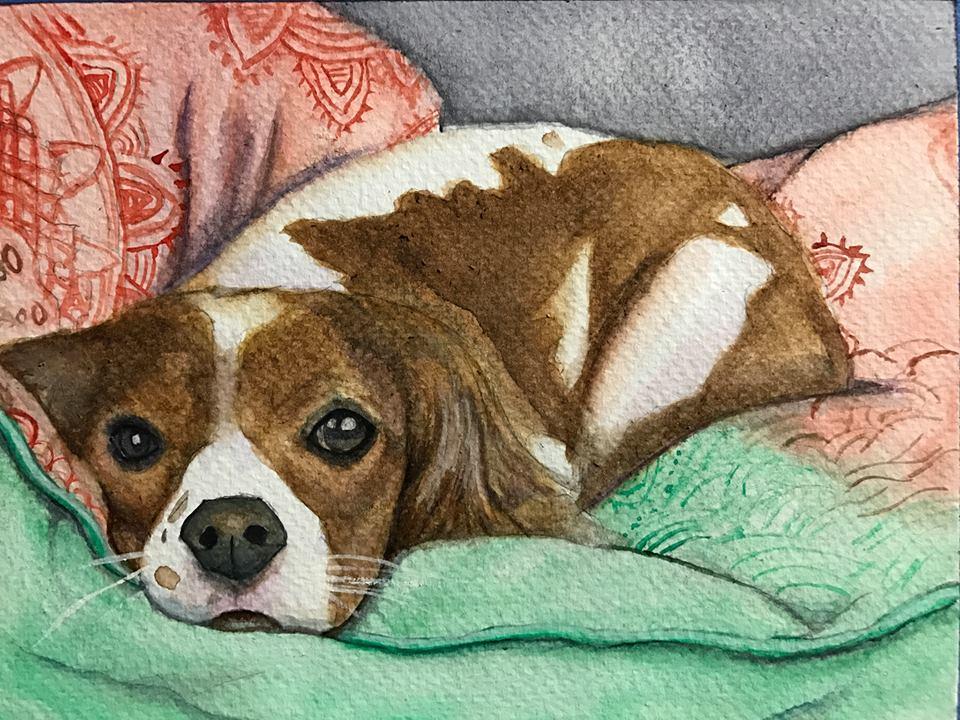 Pet Portrait #8 by ManifestiV