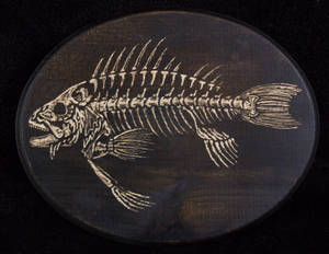 Fish Skeleton #1