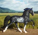 Sabino Tennessee Walking Horse
