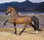 Bay Tennessee Walking Horse