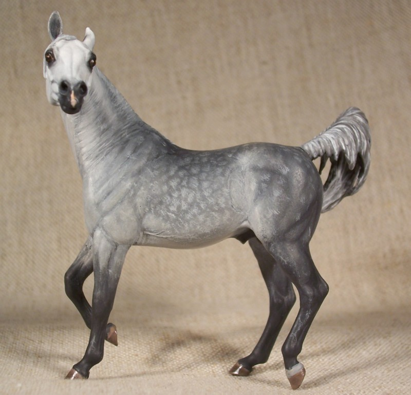 Dapple Grey Arabian Stallion by ymagier