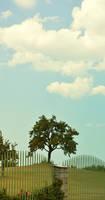 TREE STOCK 03