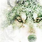 Wolf // Susi