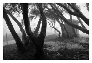 Fog in the Trees II