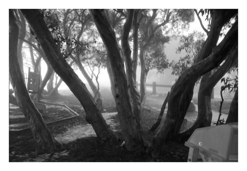 Fog in the Trees III