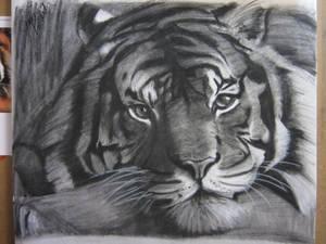 Charcoal Tiger Drawing by Jackolantern104