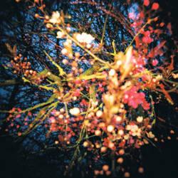 Twilight Blossom by PurestGreen