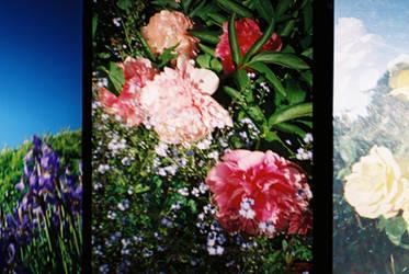 Bloom by PurestGreen
