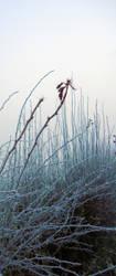 Freezing Fog by PurestGreen