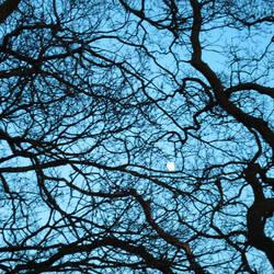 Winter Moon by PurestGreen