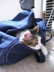 There's a cat in the bag... by charlinedrice