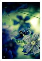 bumble-bee II by erroid