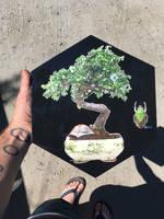 bonsai camping 2 by bluespectralmonkey