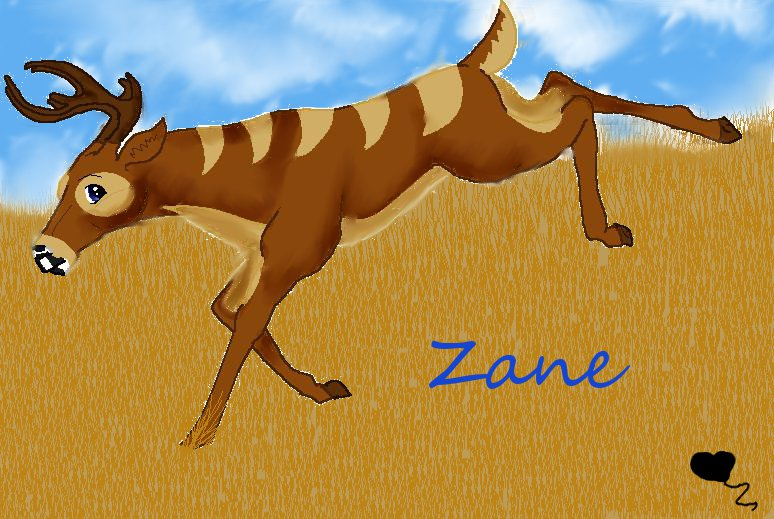 Zane by CatcherOfDreamss