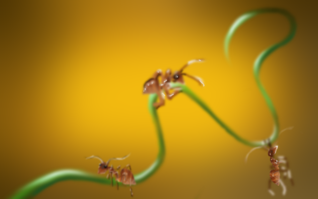 Ants by Ambruno