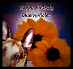 Happy Day  BlueivyViolet by Ambruno