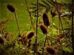 Thorn bushes