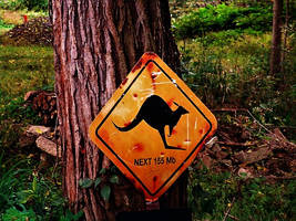 Kangaroo's here by Ambruno