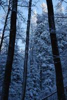 zimowo 3 by takhisis-pl