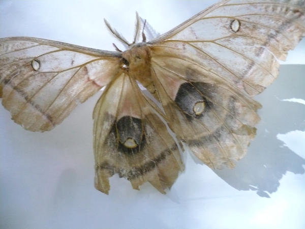 Moth 2 by sketchydreamerstock
