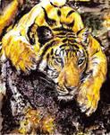 Tiger Watercolours