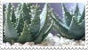 Succulent Stamp by Gay-Mage-Of-Space