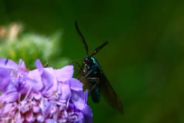 Bug :3