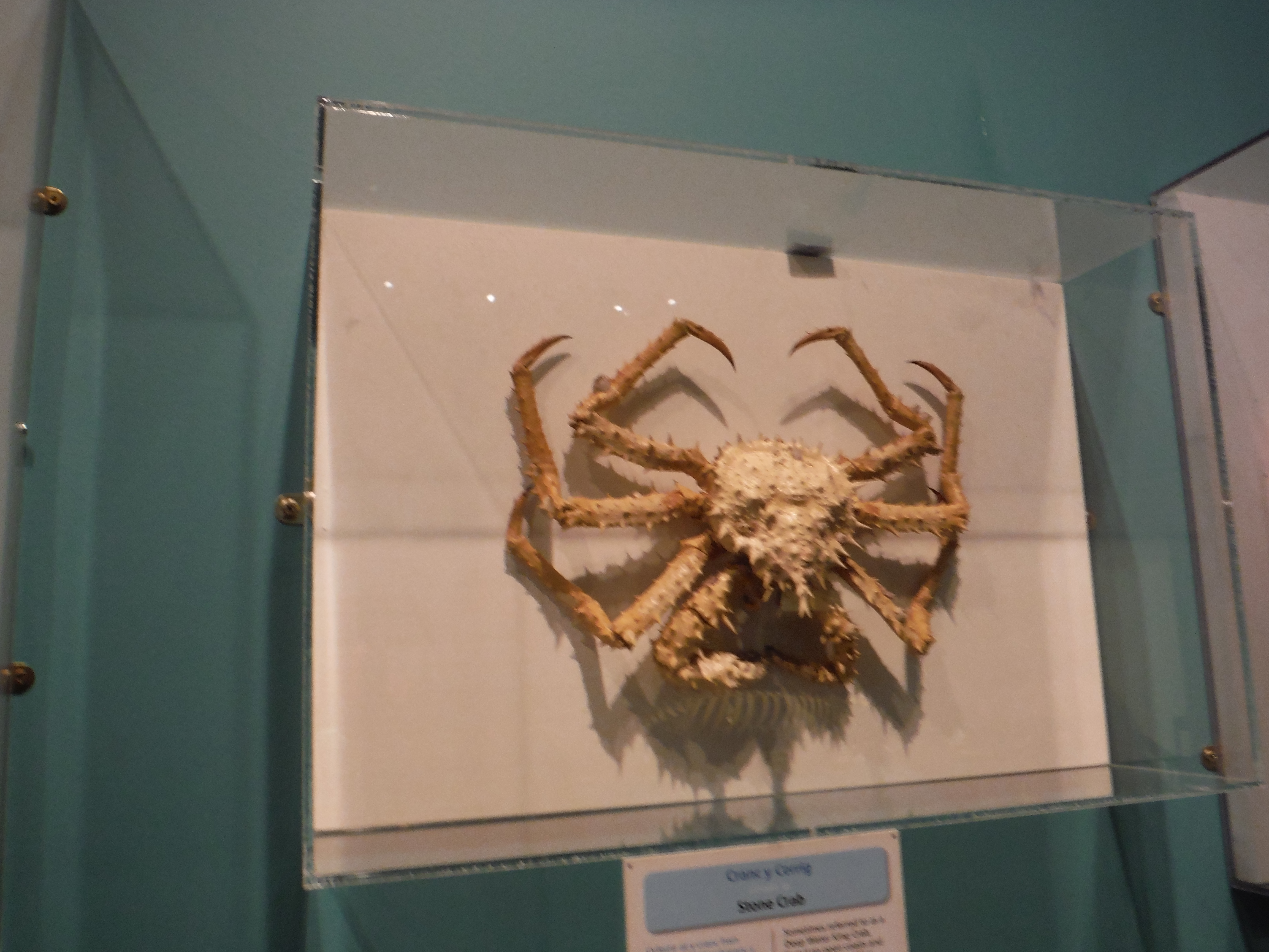 how to make a crab model