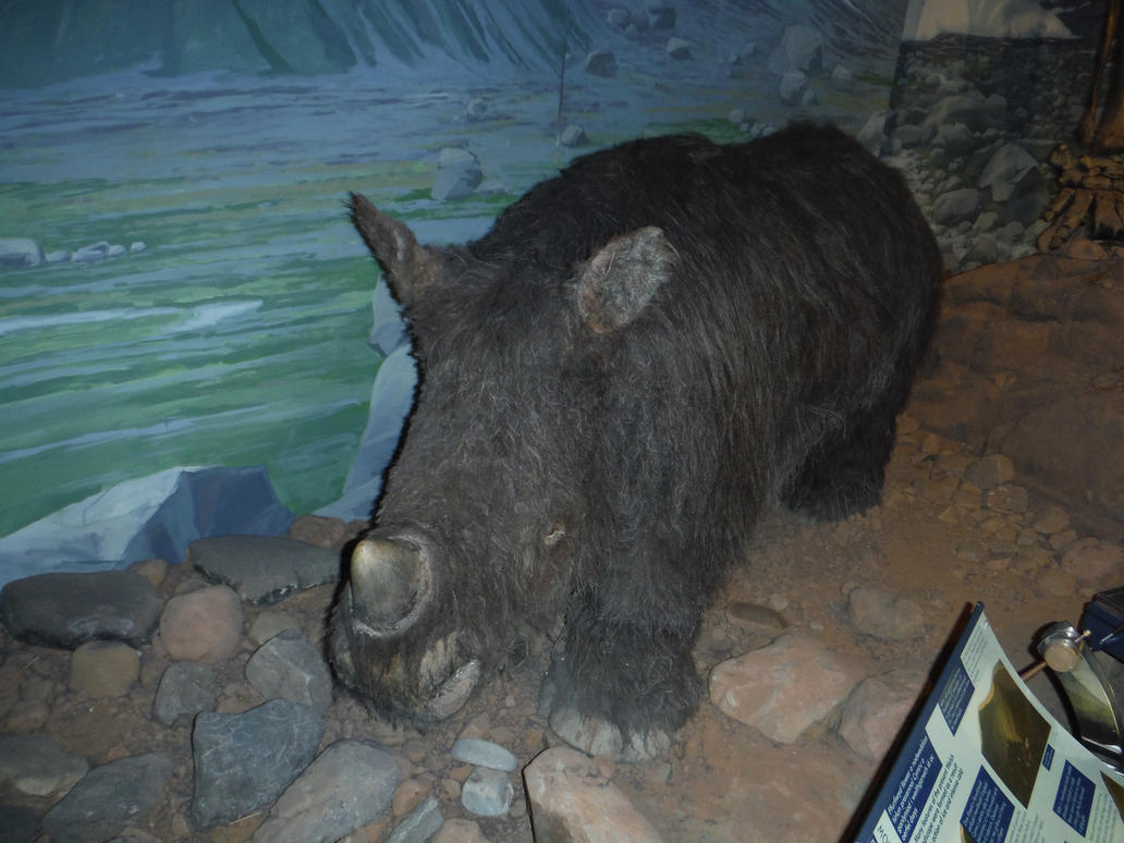 Woolly Rhinoceros by tombola1993