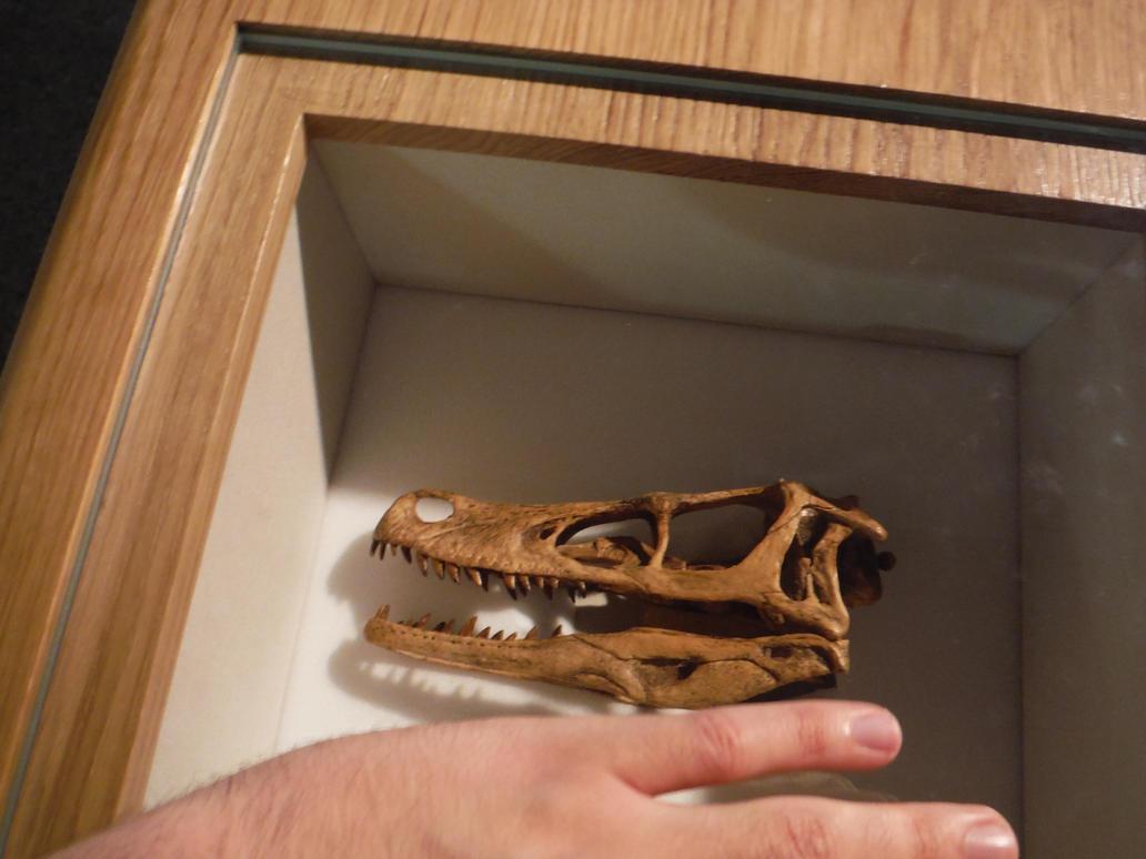 Velociraptor skull by tombola1993