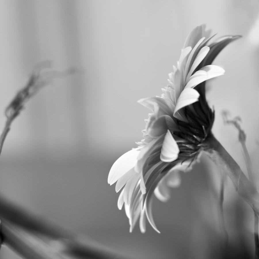 Seule by TiRiSh