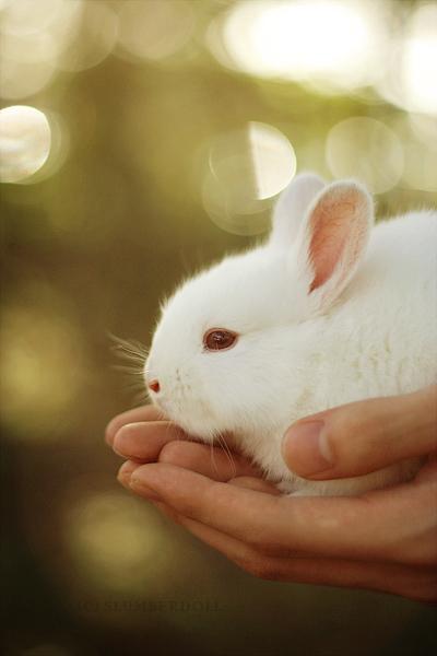Rabbit 01 by slumberdoll