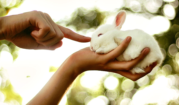 Rabbit 03 by slumberdoll