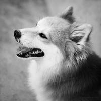 Dog 02 by slumberdoll